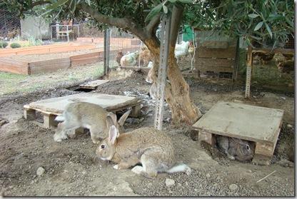 Corral conejos 2