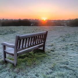 Frosty Bench by Martin Fuge - Landscapes Sunsets & Sunrises ( uk, bench, eastyorkshire, frost, beverleywestwood, scenic, england, winter, nature, yorkshire, weather, sunrise, frosty,  )
