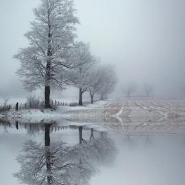 by Kimberley Merrifield - Landscapes Prairies, Meadows & Fields ( reflection, winter, waterscape, trees, landscape,  )