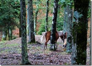 caballos libres-qpr