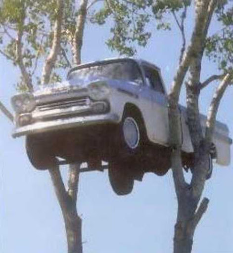 Car in tree