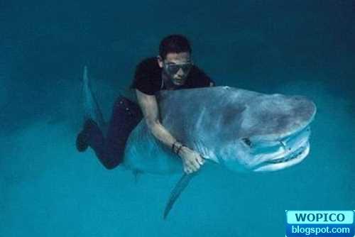 Riding Shark