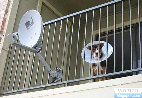 Radar Dog