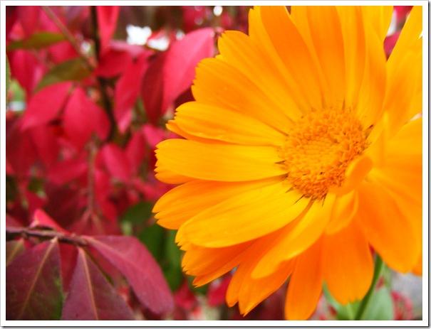 Flower & Burning Bush