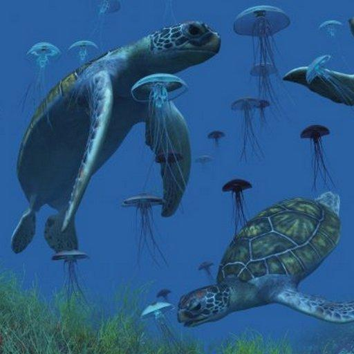 Sea Turtle Go LauncherEx Them LOGO-APP點子