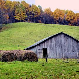 Hay Barn by Melanie Goins - Landscapes Prairies, Meadows & Fields ( field, barn, hay bales, fall, trees,  )