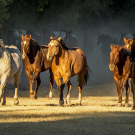 Digital Equines by Mike O'Connor - Animals Horses ( gallop, horses, arizona, herd, circle z ranch,  )