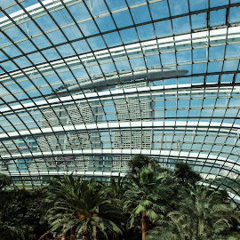 inside the flower dome by Roger Foo - Buildings & Architecture Other Interior ( marina bay sands, gardens by the bay, flower dome, singapore, glass ceiling, Architecture, Ceilings, Ceiling, Buildings, Building )