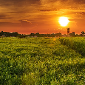 by Rupam Chakraborty - Landscapes Sunsets & Sunrises ( nature, village, autumn, landscapes, fields,  )
