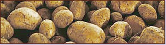 potato_banner