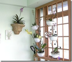 orchid-corner