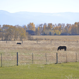 bozeman, montana by Clare Parsons - Landscapes Prairies, Meadows & Fields