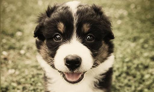 PuppyWall FREE -LiveWallpaper