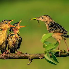 It's My Turn Now by Roy Husada - Animals Birds (  )