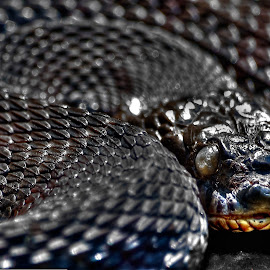 Northern Water Snake by Hiram Christian - Animals Reptiles ( northern water snake )