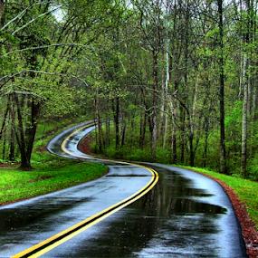 Natchez Trace Rainy Day by Julie Dant - Transportation Roads ( rainy spring, outdoors, natchez trace, springtime, spring, photography, rainy days, mississippi )
