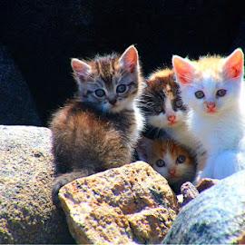 Kittens  by Andre Bez - Animals - Cats Kittens ( cats, homeless, beach, kittens, cute )