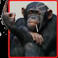 App Funny Monkey Live Wallpaper apk for kindle fire