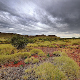 Spinifex by Rizal Ismail - Landscapes Deserts