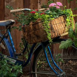 floral cycling by Paul Judy - Instagram & Mobile iPhone ( biking, flowers, iphone, antique, garden )