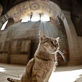 The cat of St. Sophia by Manianna Tserkezou - Animals - Cats Portraits