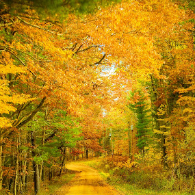 Into the woods by Christine Weaver-Cimala - Landscapes Forests ( michigan, nature, fall, trees, forest, yellow, road, leaves, landscape, woods )