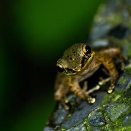 by Dee Donald - Animals Amphibians