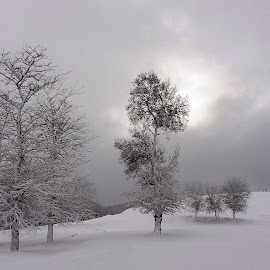 winter scenery by Faouzi Taleb - Landscapes Weather ( snow, winter, cold, black and white, b&w, landscape )