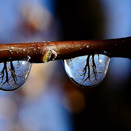 Ran drop by Denton Thaves - Nature Up Close Natural Waterdrops ( rain drops )
