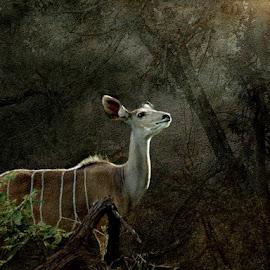 Garden of Eden by Bjørn Borge-Lunde - Digital Art Places ( wild animal, wilderness, nature, wildlife, africa, antilope, deer )