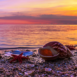 Seashell beach by John Georgiou - Landscapes Beaches ( water, sea star, clouds, sand, warm, sea, horizon, ocean, beach, beauty, sunlight, sea shield, sky, sunny, sunset, seashell, sundown, summer,  )