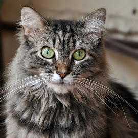 Tobie by Jane Singer - Animals - Cats Portraits
