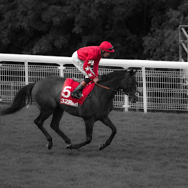 Glorious Goodwood 2014 - Number 5 by Greg Roberts - Sports & Fitness Other Sports ( glorious goodwood 2014, racing, horse, sport, close )