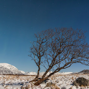 Lonely tree by Benny Høynes - Landscapes Prairies, Meadows & Fields ( winter, tree, srars, snow, norway )