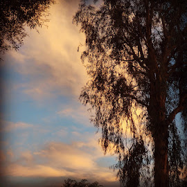 Blue & others  by Paul Stanley - Instagram & Mobile Instagram ( cloudporn hollywood )