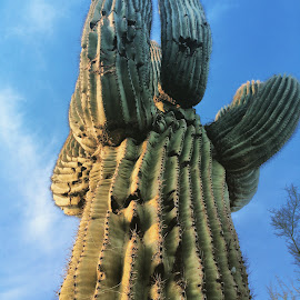 Cactus in Arizona by Julianne Statnick - Instagram & Mobile iPhone