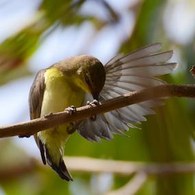 Its Preening time! by Yogesh Kumar - Animals Birds ( sunbird, tree, beak, preening, bokeh )