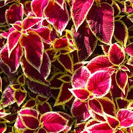 by Joe Fleischman - Nature Up Close Leaves & Grasses