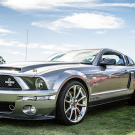 Shelby GT 500 by Allyn Cooper - Transportation Automobiles ( perth, ford mustang, cars, western australia )