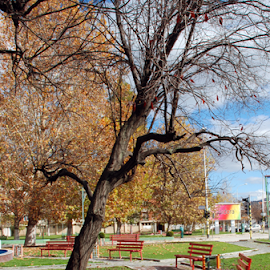 Autumn in the neighborhood by Gordana Nikolovska-Dimeska - City,  Street & Park  Neighborhoods ( colorful, leaves, roam here, macedonia, hiking, city, nature, urbanized, tree, autumn, trail, autumn day, branches, hiking trail, diversity, park, colors, backgrounds, patchwork, urban, benches, fall, background, wallpapers, naturally wallpaper, trees, walk, natural,  )