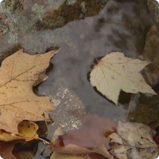 Autumn Live Wallpaper HD LOGO-APP點子