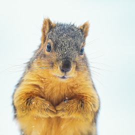 Got Nuts? by Andrew Lawlor - Animals Other Mammals