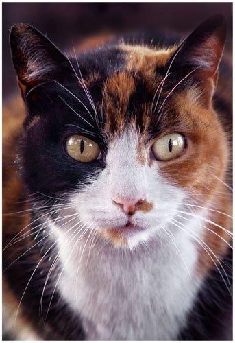 Cat. Foto: Horacio Iannella