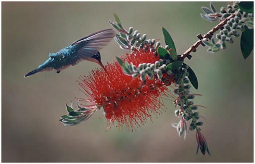 Hummingbird. Foto: Horacio Iannella