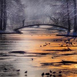 frozen lake by Alexandru Andreescu - City,  Street & Park  City Parks