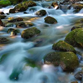 by Nikša Šapro - Nature Up Close Water