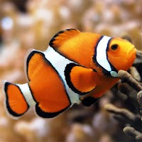 Screenshot of Fish Jigsaw Puzzles