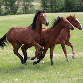 running horses in the paddock by Alessandra Cassola - Animals Horses ( #horses, #race horses, #animal )