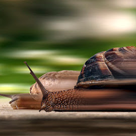 the fast and the furious by George Petridis - Digital Art Animals ( snails, speed, funny, run, race )