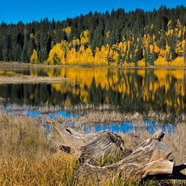 Mesa Autumn by David Short - Landscapes Forests ( reflection, stump, autumn, colorado, david lee short, lake )